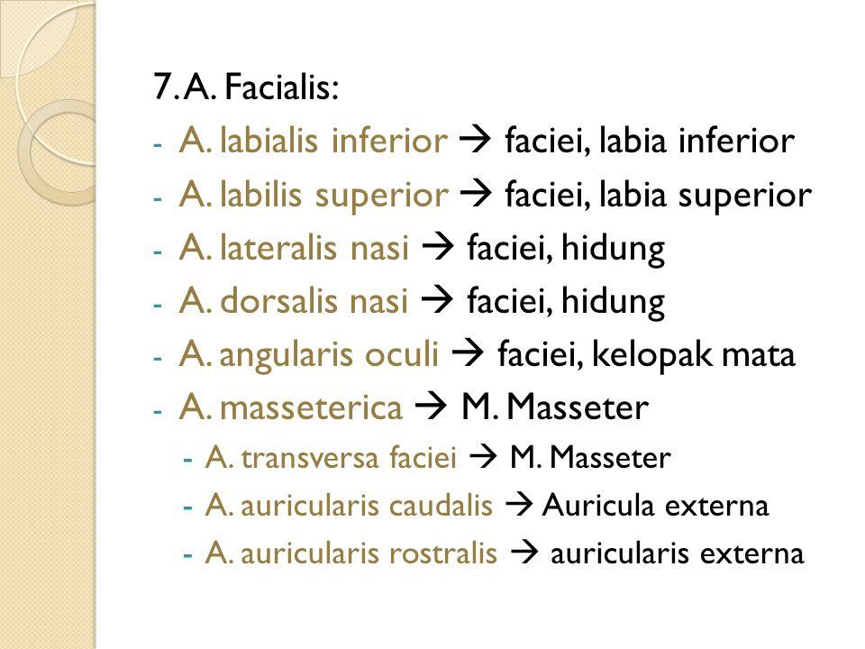 7. A. Facialis: - A. labialis inferior  faciei, labia inferior - A. labilis superior  faciei, labia superior - A. lateralis nasi  faciei, hidung -