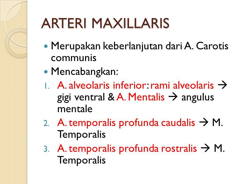 ARTERI MAXILLARIS Merupakan keberlanjutan dari A. Carotis communis Mencabangkan: 1. A. alveolaris inferior: rami alveolaris  gigi ventral & A. Mental