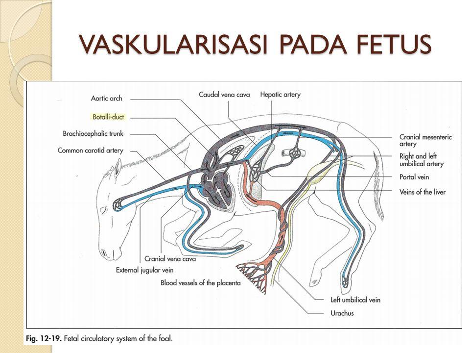 VASKULARISASI PADA FETUS