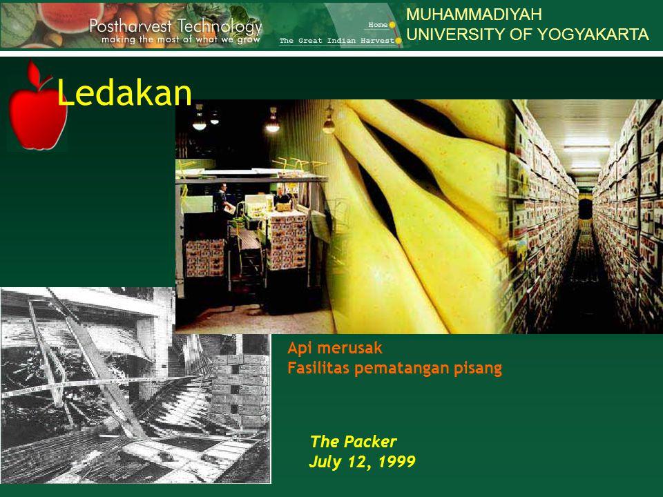 MUHAMMADIYAH UNIVERSITY OF YOGYAKARTA The Packer July 12, 1999 Api merusak Fasilitas pematangan pisang Ledakan