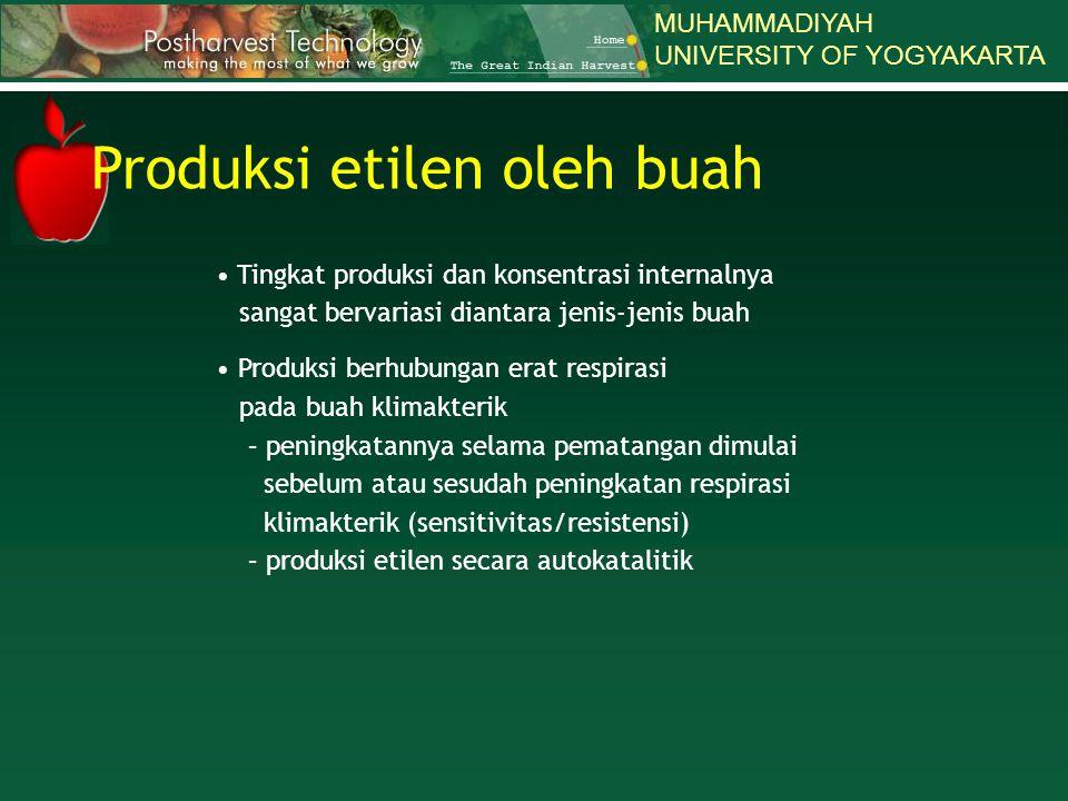 MUHAMMADIYAH UNIVERSITY OF YOGYAKARTA Tingkat produksi dan konsentrasi internalnya sangat bervariasi diantara jenis-jenis buah Produksi berhubungan er