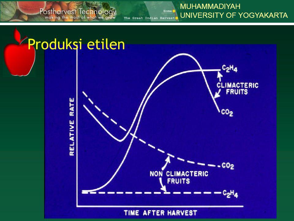 MUHAMMADIYAH UNIVERSITY OF YOGYAKARTA Produksi etilen