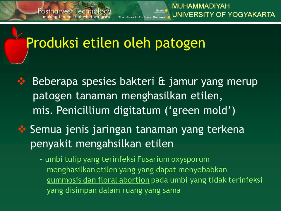 MUHAMMADIYAH UNIVERSITY OF YOGYAKARTA  Beberapa spesies bakteri & jamur yang merup patogen tanaman menghasilkan etilen, mis. Penicillium digitatum ('