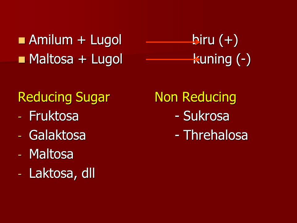 Amilum + Lugol biru (+) Amilum + Lugol biru (+) Maltosa + Lugol kuning (-) Maltosa + Lugol kuning (-) Reducing Sugar Non Reducing - Fruktosa - Sukrosa