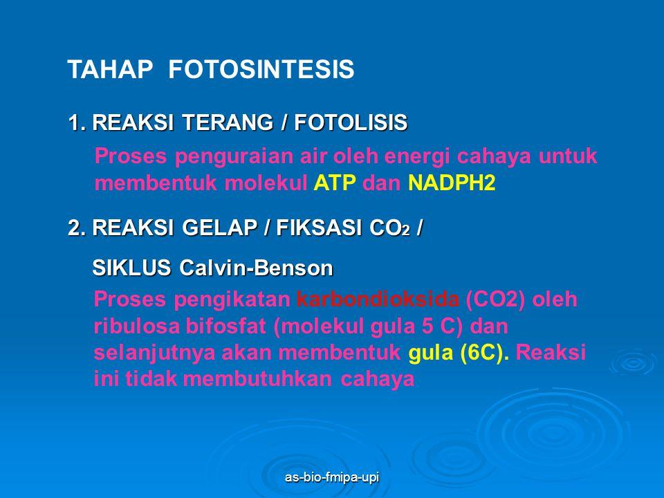 as-bio-fmipa-upi GRANA DAN STROMA