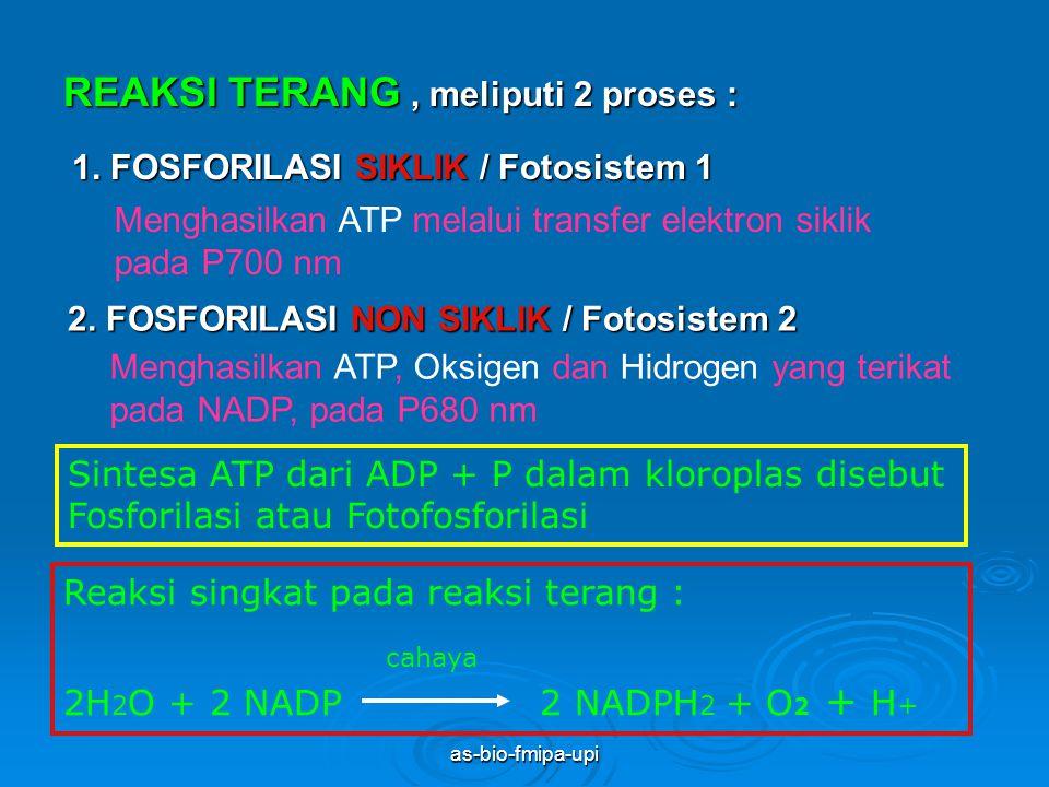as-bio-fmipa-upi TAHAP FOTOSINTESIS 1. REAKSI TERANG / FOTOLISIS 2. REAKSI GELAP / FIKSASI CO 2 / SIKLUS Calvin-Benson SIKLUS Calvin-Benson Proses pen