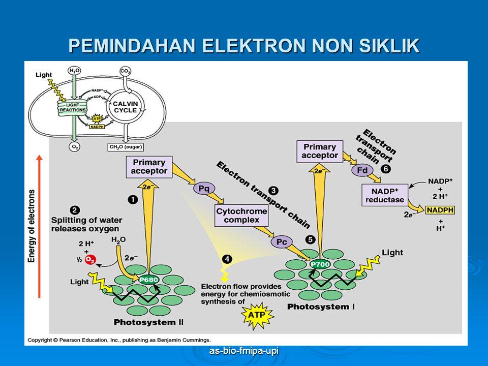as-bio-fmipa-upi PEMINDAHAN ELEKTRON SIKLIK