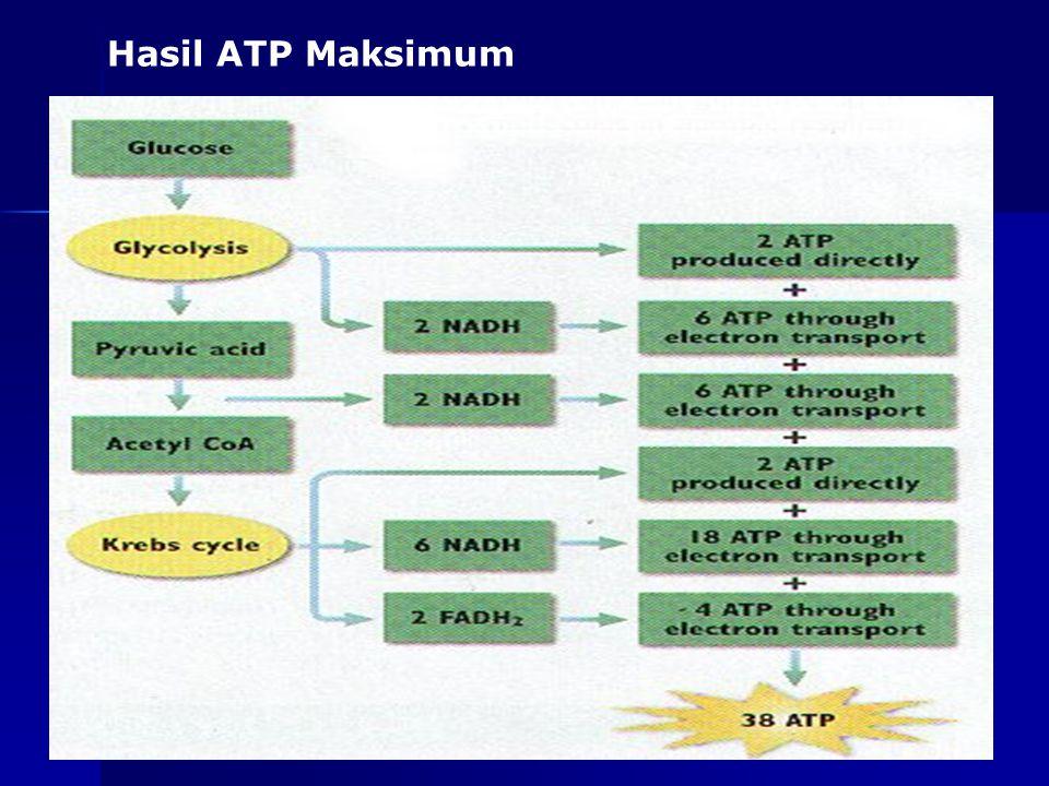 as-bio-fmipa-upi 4.