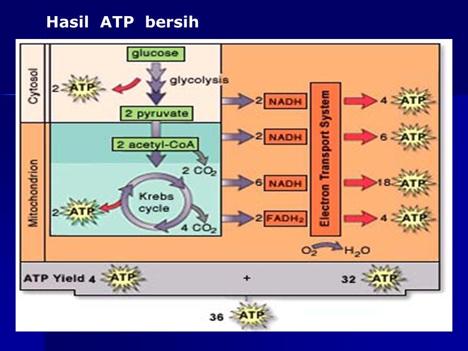 as-bio-fmipa-upi Hasil ATP Maksimum