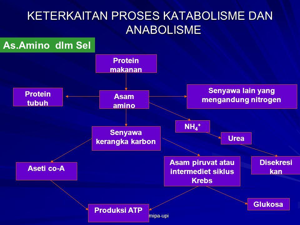 as-bio-fmipa-upi PERBANDINGAN RESPIRASI AEROB DAN ANAEROB A.KETERKAITAN PROSES KATABOLISME DAN ANABOLISME