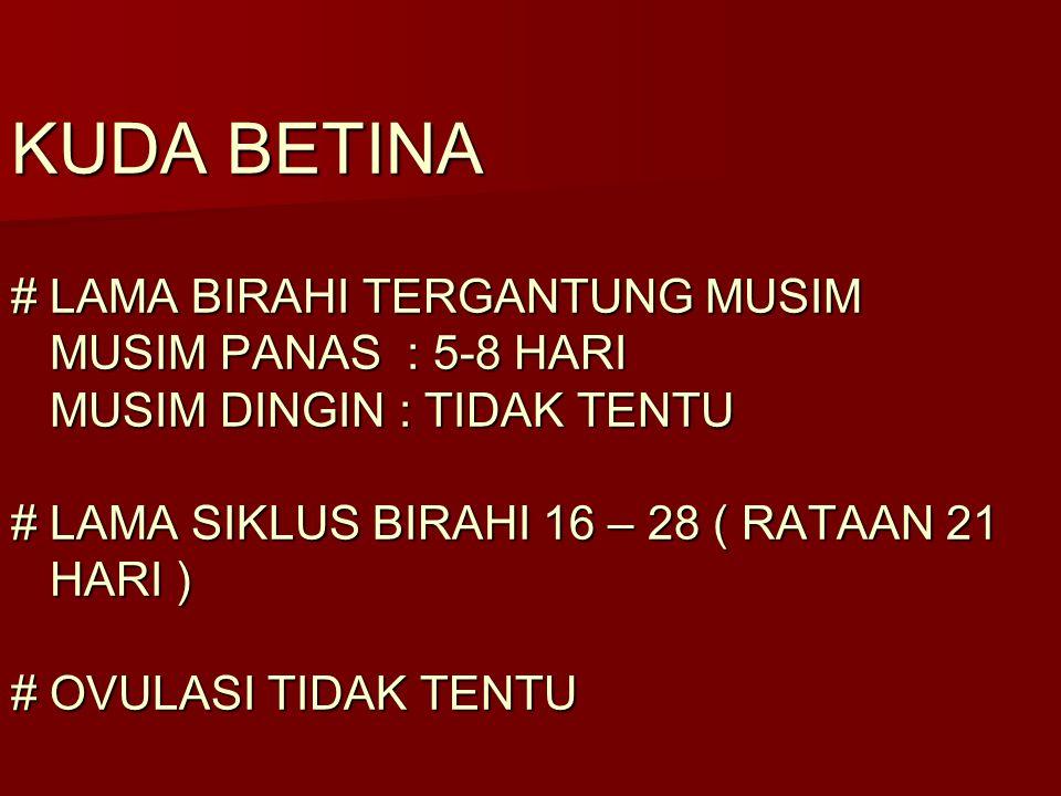 KUDA BETINA # LAMA BIRAHI TERGANTUNG MUSIM MUSIM PANAS : 5-8 HARI MUSIM DINGIN : TIDAK TENTU # LAMA SIKLUS BIRAHI 16 – 28 ( RATAAN 21 HARI ) # OVULASI