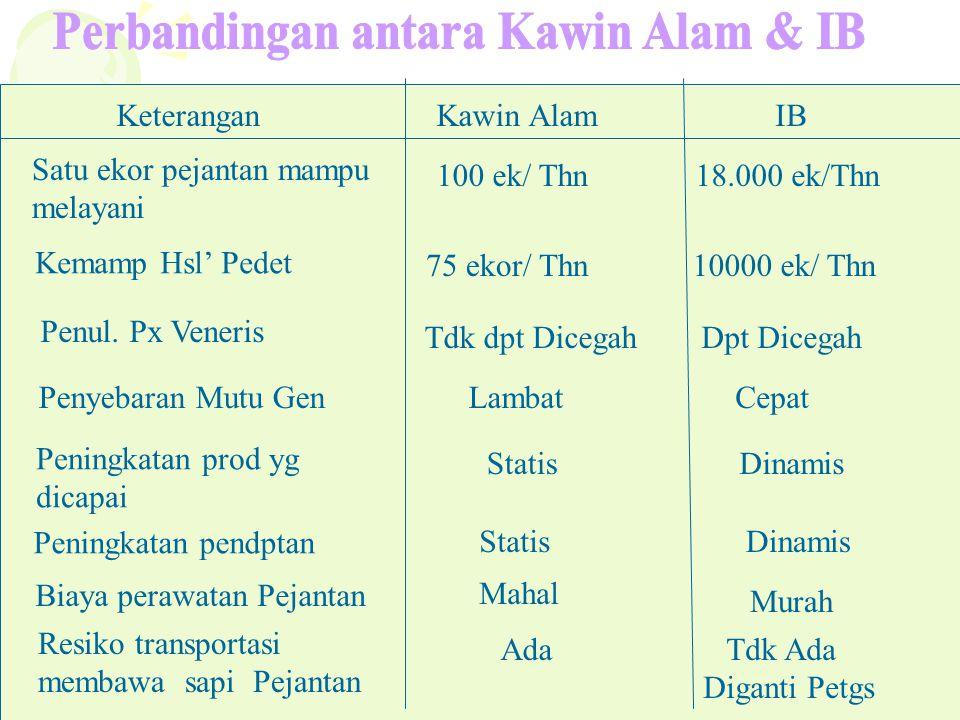 KeteranganKawin Alam IB Satu ekor pejantan mampu melayani 100 ek/ Thn18.000 ek/Thn Kemamp Hsl' Pedet 75 ekor/ Thn10000 ek/ Thn Penul. Px Veneris Tdk d