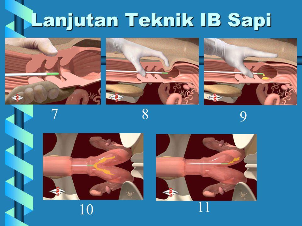 Lanjutan Teknik IB Sapi 78 9 10 11