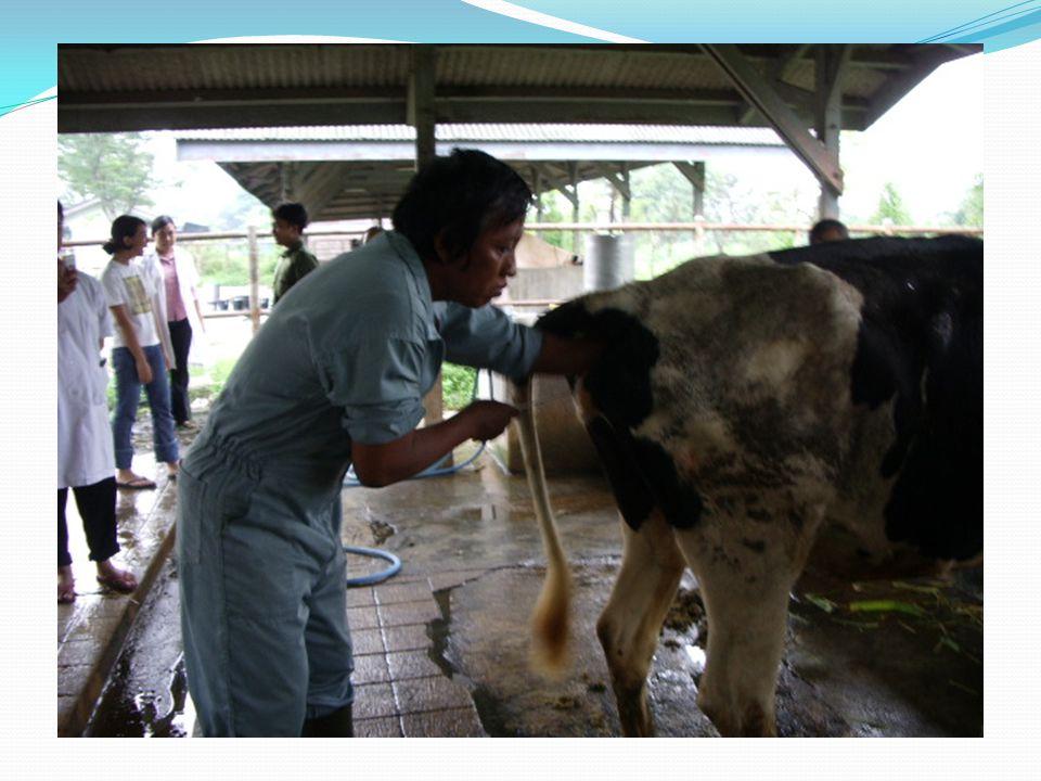 EVALUASI HASIL IB Landasan kesuksesan operasional program IB adalah mampu mempertahankan fertilitas ternak agar tetap tinggi.