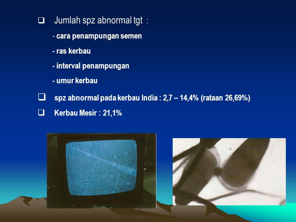  Jumlah spz abnormal tgt : - cara penampungan semen - ras kerbau - interval penampungan - umur kerbau  spz abnormal pada kerbau India : 2,7 – 14,4% (rataan 26,69%)  Kerbau Mesir : 21,1%