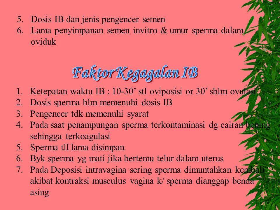 5. Dosis IB dan jenis pengencer semen 6.Lama penyimpanan semen invitro & umur sperma dalam oviduk 1.Ketepatan waktu IB : 10-30' stl oviposisi or 30' s