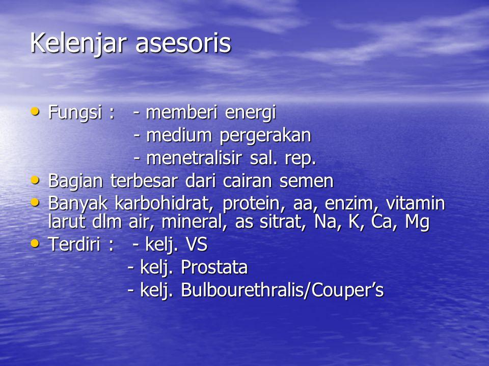 Kelenjar asesoris Fungsi : - memberi energi Fungsi : - memberi energi - medium pergerakan - medium pergerakan - menetralisir sal. rep. - menetralisir