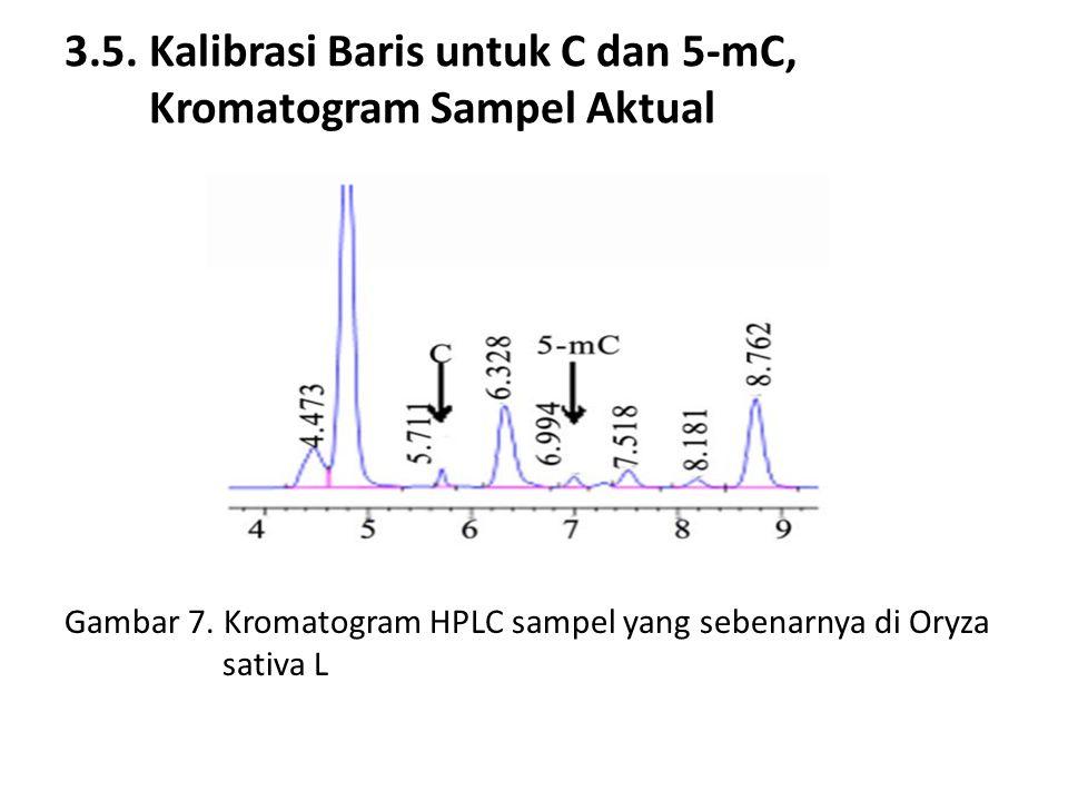 3.5. Kalibrasi Baris untuk C dan 5-mC, Kromatogram Sampel Aktual Gambar 7.