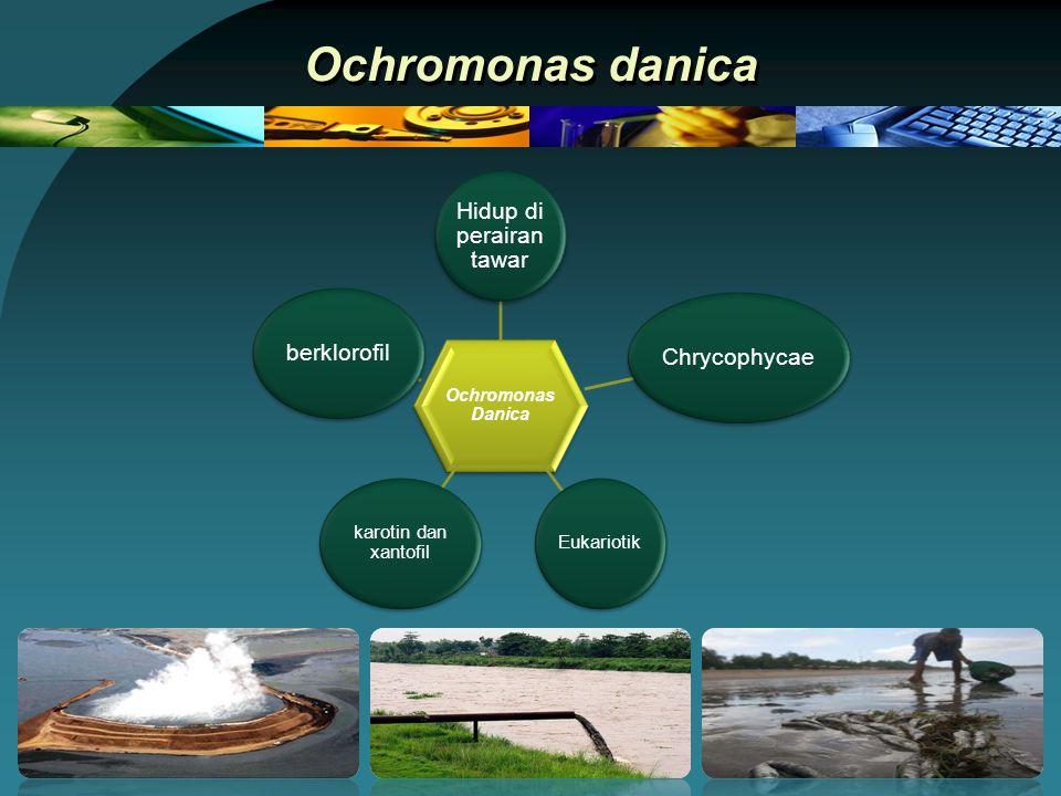 Ochromonas danica Ochromonas Danica Hidup di perairan tawar Chrycophycae Eukariotik karotin dan xantofil berklorofil