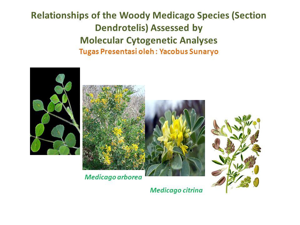 INTRODUCTION Medicago adalah genus dari famili legume (Fabaceae) yang termasuk spesies penting secara ekonomi dan pertanian (yaitu M.