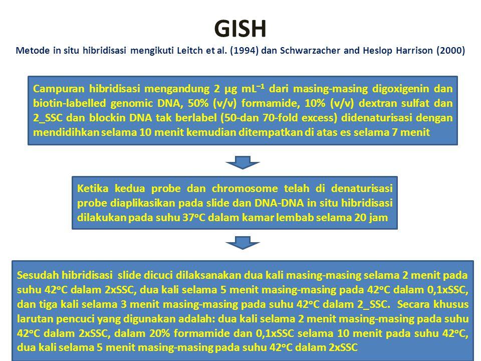 GISH Metode in situ hibridisasi mengikuti Leitch et al. (1994) dan Schwarzacher and Heslop Harrison (2000) Campuran hibridisasi mengandung 2 µg mL –1