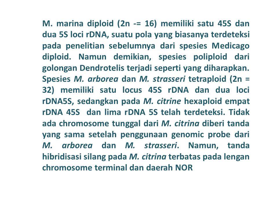 M. marina diploid (2n -= 16) memiliki satu 45S dan dua 5S loci rDNA, suatu pola yang biasanya terdeteksi pada penelitian sebelumnya dari spesies Medic