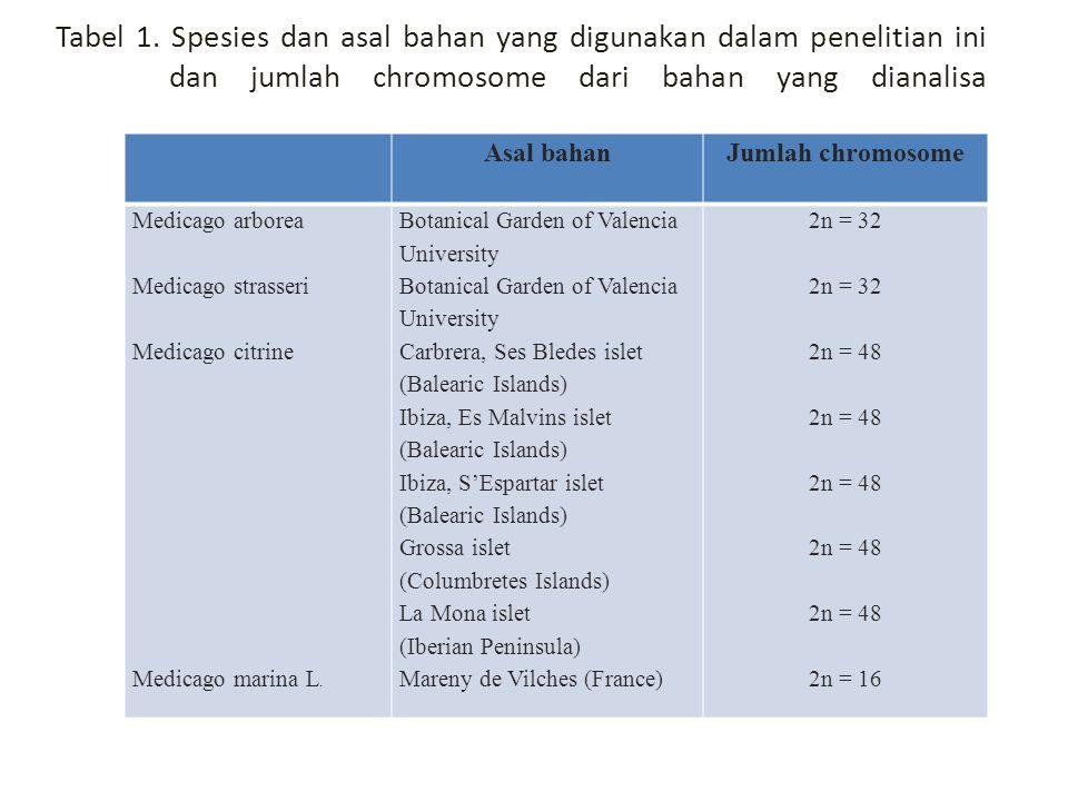 Tabel 1. Spesies dan asal bahan yang digunakan dalam penelitian ini dan jumlah chromosome dari bahan yang dianalisa Asal bahanJumlah chromosome Medica