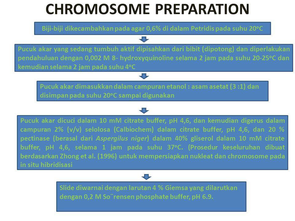 CHROMOSOME PREPARATION Biji-biji dikecambahkan pada agar 0,6% di dalam Petridis pada suhu 20 o C Pucuk akar yang sedang tumbuh aktif dipisahkan dari b