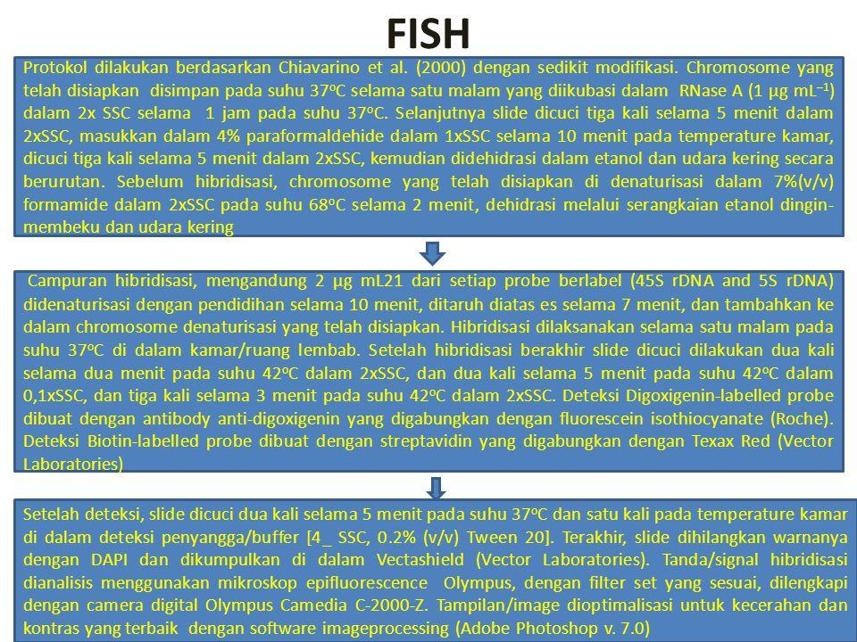 FISH Protokol dilakukan berdasarkan Chiavarino et al. (2000) dengan sedikit modifikasi. Chromosome yang telah disiapkan disimpan pada suhu 37 o C sela