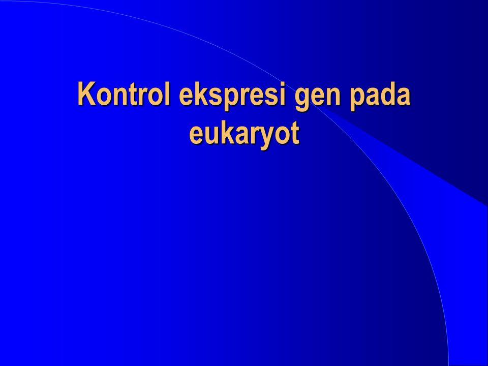 Eukaryotic Promoters 5' Exon 1 Promoter Sequence elements ~200 bp TATA ~-25 Initiator TATA Box Transcription start site (Template strand) -1+1 SSTATAAAASSSSSNNNNNNNNNNNNNNNNNYYCAYYYYYNN S = C or G Y = C or T N = A, T, G or C