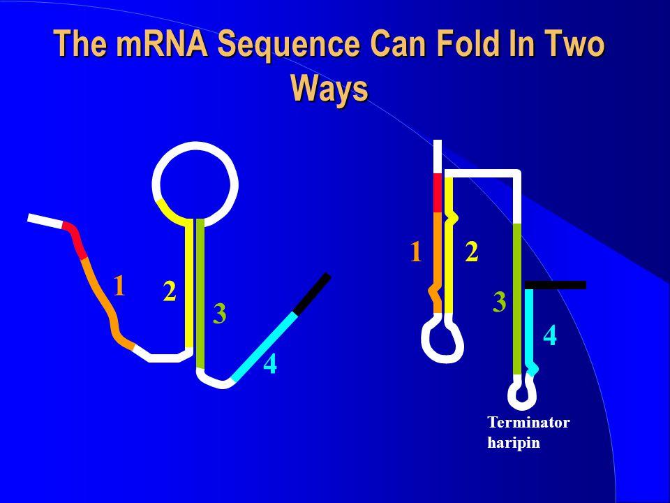 Initiation TFIIA and B Binding TFIID TFIIA -1+1 Transcription start site TFIIB