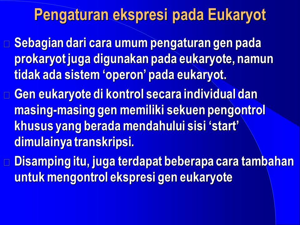 Pengaturan ekspresi pada Eukaryot Sebagian dari cara umum pengaturan gen pada prokaryot juga digunakan pada eukaryote, namun tidak ada sistem 'operon'