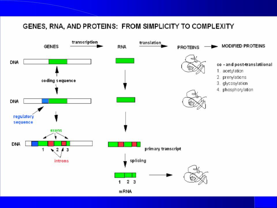 Initiation TFIIH and TFIIJ Binding -1+1 Transcription start site RNA Polymerase P P P