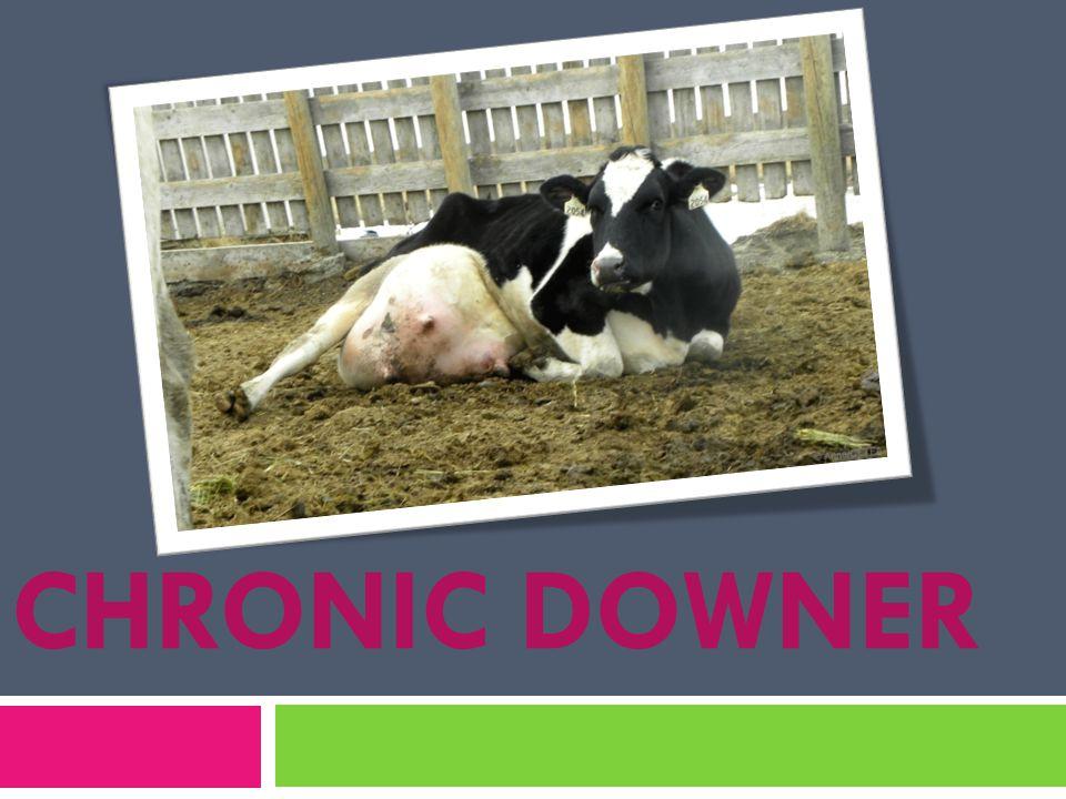 CHRONIC DOWNER