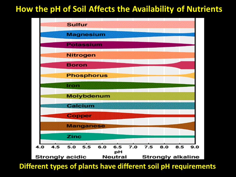 How the pH of Soil Affects the Availability of Nutrients Different types of plants have different soil pH requirements