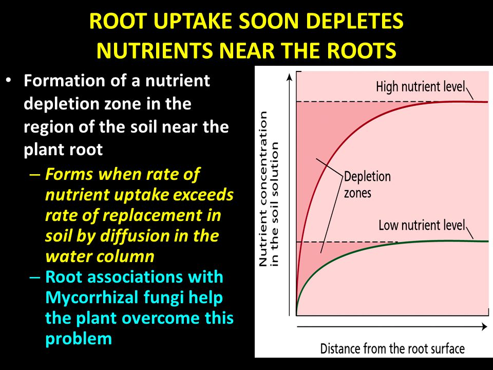 ROOT UPTAKE SOON DEPLETES NUTRIENTS NEAR THE ROOTS Formation of a nutrient depletion zone in the region of the soil near the plant root – Forms when r