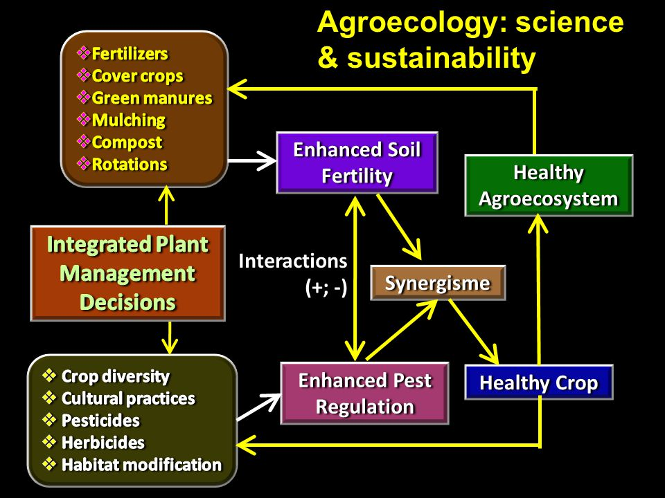 Enhanced Soil Fertility Enhanced Pest Regulation Synergisme Healthy Agroecosystem Healthy Crop Interactions (+; -) Agroecology: science & sustainabili