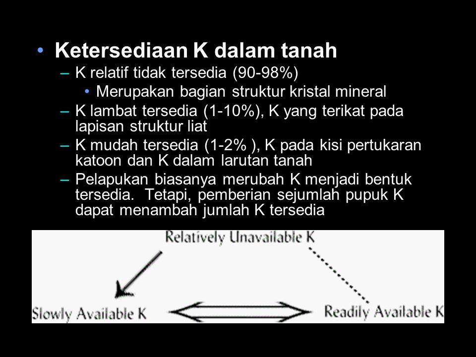 Ketersediaan K dalam tanah –K relatif tidak tersedia (90-98%) Merupakan bagian struktur kristal mineral –K lambat tersedia (1-10%), K yang terikat pad
