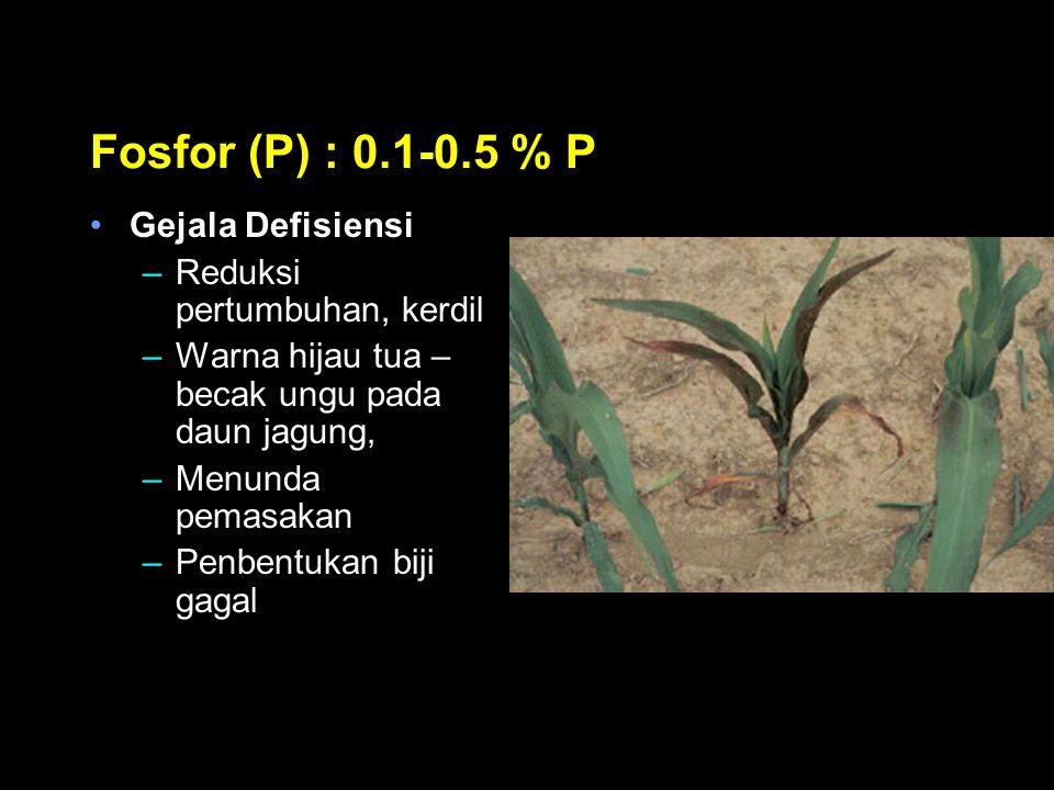 Fosfor (P) : 0.1-0.5 % P Gejala Defisiensi –Reduksi pertumbuhan, kerdil –Warna hijau tua – becak ungu pada daun jagung, –Menunda pemasakan –Penbentuka