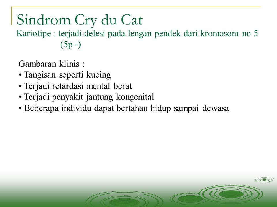 Sindrom Cry du Cat Kariotipe : terjadi delesi pada lengan pendek dari kromosom no 5 (5p -) Gambaran klinis : Tangisan seperti kucing Terjadi retardasi