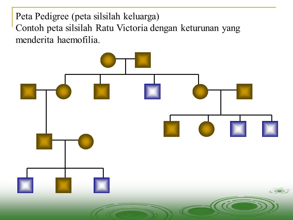 Hermafrodit dan Pseudohermafrodit Pseudohermafrodit wanita Mempunyai kariotipe 46,XX.
