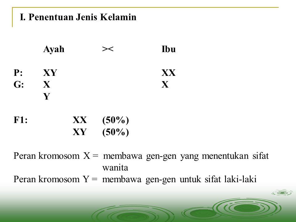 I. Penentuan Jenis Kelamin Ayah><Ibu P:XYXX G:XX Y F1:XX(50%) XY(50%) Peran kromosom X = membawa gen-gen yang menentukan sifat wanita Peran kromosom Y