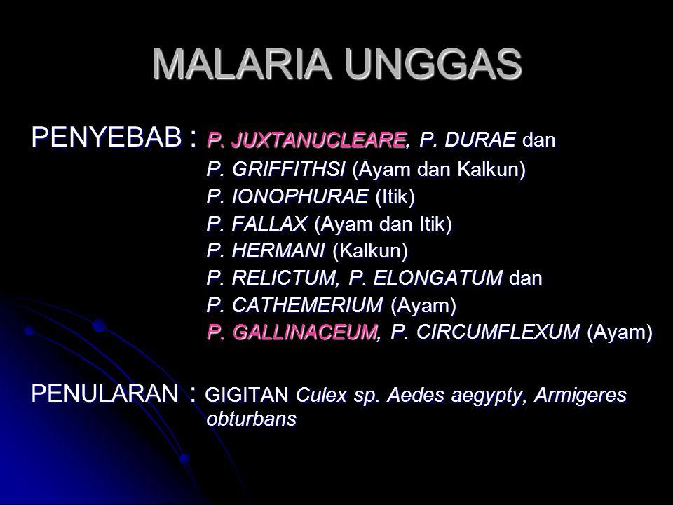 DIAGNOSA BANDING  ILT  GUMBORO  KERACUNAN SULFA  MALARIA UNGGAS PENGENDALIAN  KONTROL VEKTOR PENULAR  KEBERSIHAN LINGKUNGAN (DARI SEMAK)  VAKSI