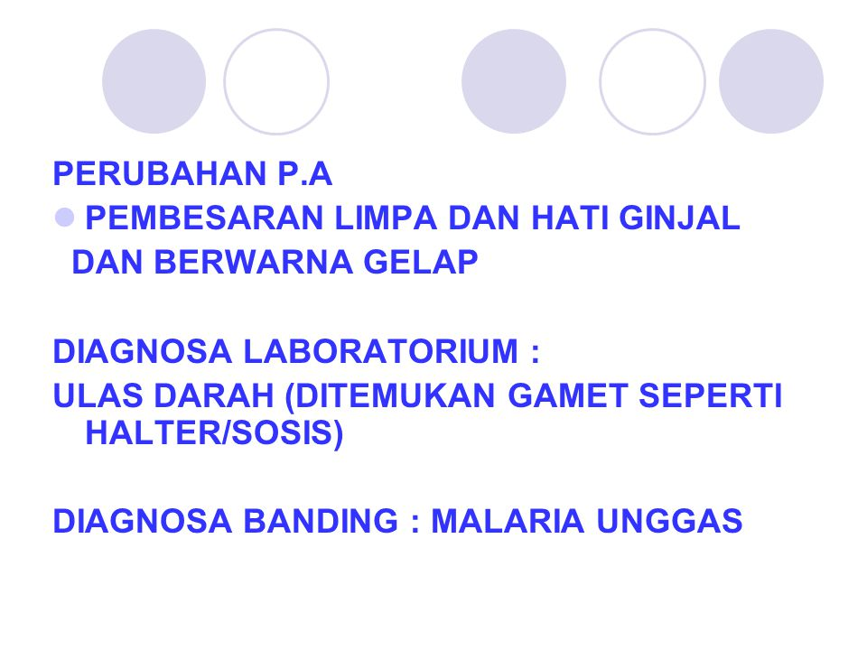 SKIZON Haemoproteus sp.DI JARINGAN