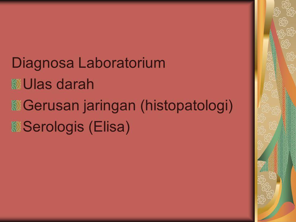 Patologi Anatomi Leucocytozoonosis 3 1 2 4 5