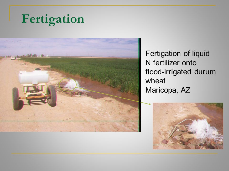 Fertigation Fertigation of liquid N fertilizer onto flood-irrigated durum wheat Maricopa, AZ