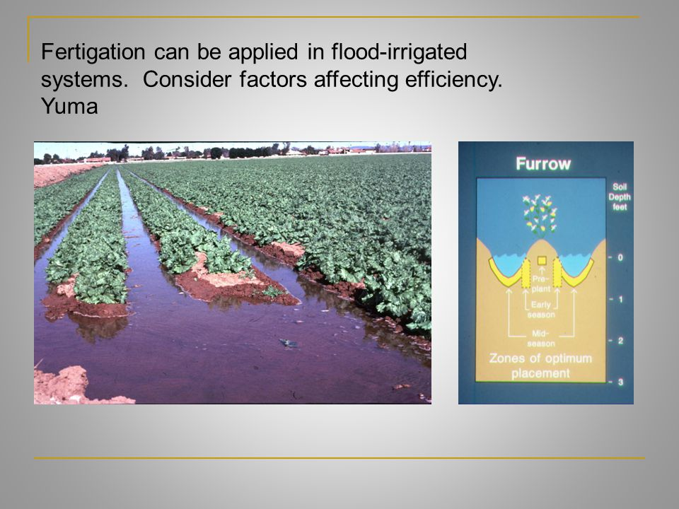 Fertigation can be applied in flood-irrigated systems. Consider factors affecting efficiency. Yuma