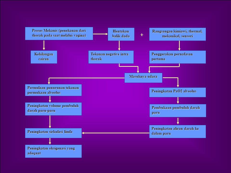 PERUBAHAN-PERUBAHAN FISIOLOGIS PADA BAYI BARU LAHIR 1.Perubahan pada Sistem Pernapasan Rangsangan u/ grk pernafasan : Tekanan mekanik dr thoraks Pe 