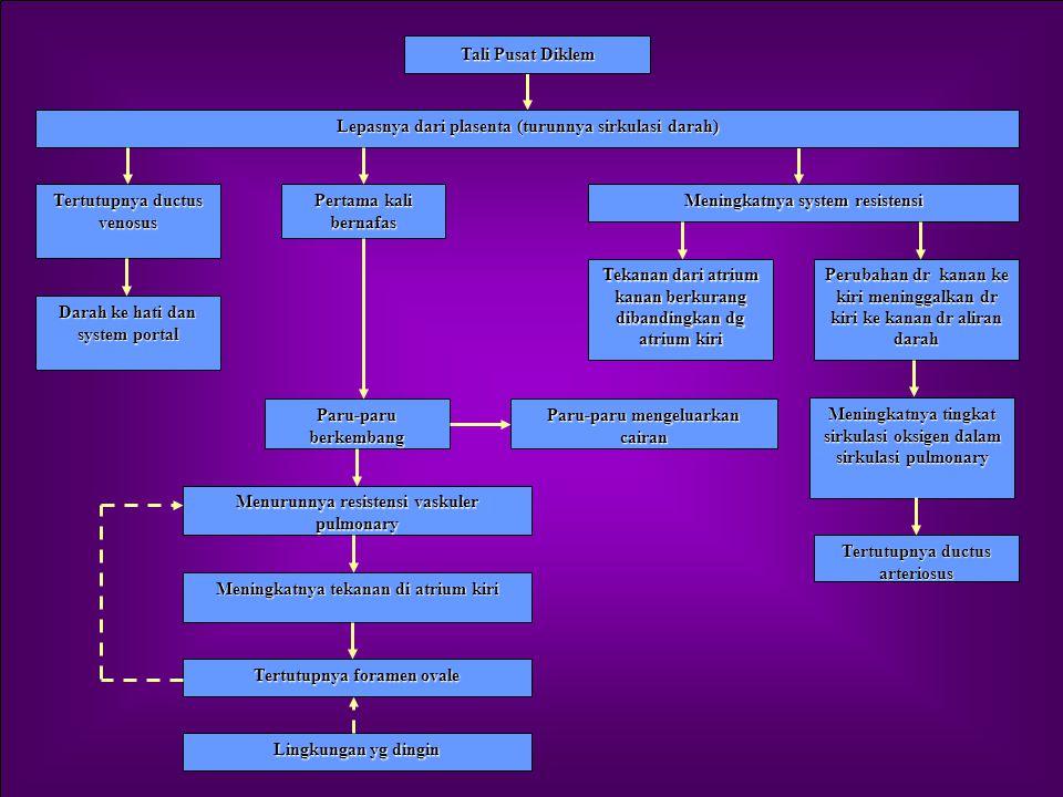 Lanjutan 2.Perubahan pada Sistem Kardiovaskuler Tjd perubahan besar, yaitu : Penutupan foramen ovale pd atrium jantung Penutupan duktus arteriosus ant
