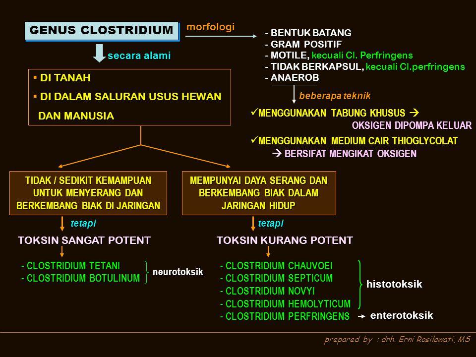 prepared by : drh. Erni Rosilawati, MS GENUS CLOSTRIDIUM morfologi - BENTUK BATANG - GRAM POSITIF - MOTILE, kecuali Cl. Perfringens - TIDAK BERKAPSUL,
